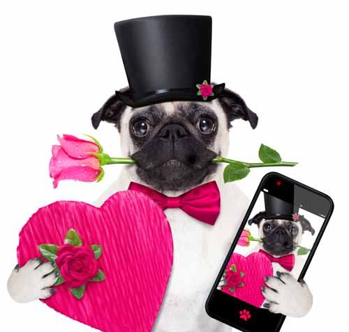 pug photo with hear and mobile device